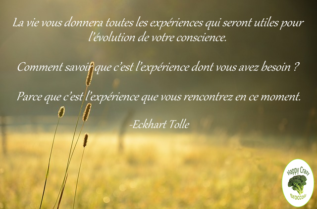 experience-tolle